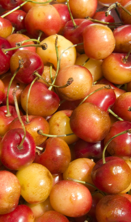 Cherries from the Hillsboro Farmers Market