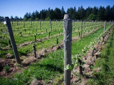 Patton Valley Vineyards