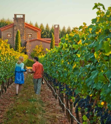 Couple in Vineyards Alloro
