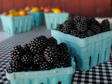 Blackberries Smith Berry Barn