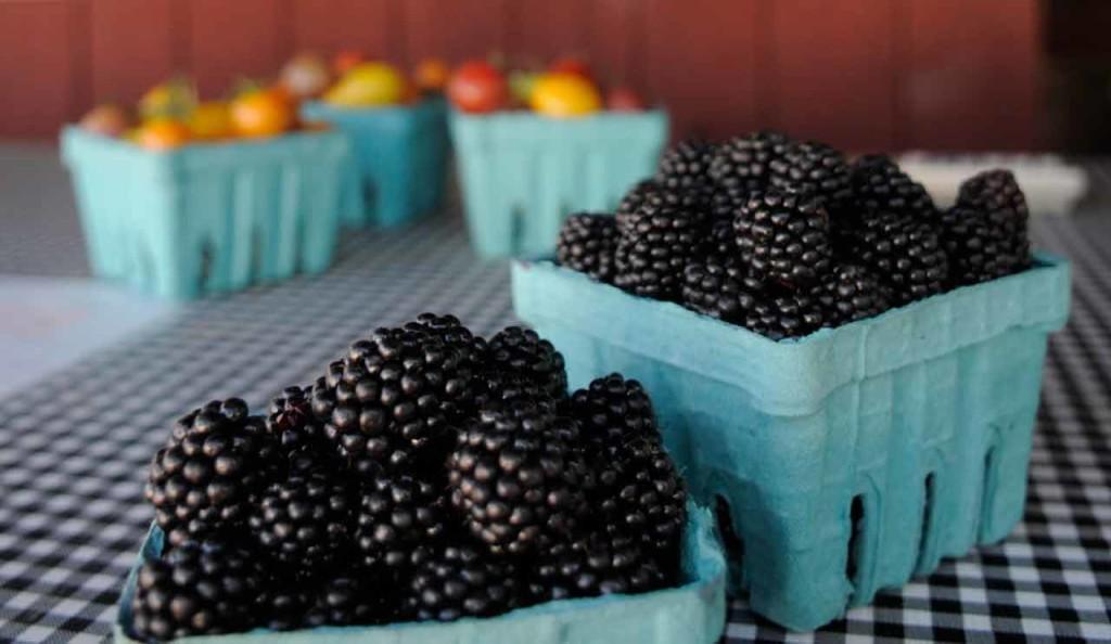 Oregon Farms - Smith Berry Barn, Hillsboro in the Tualatin Valley