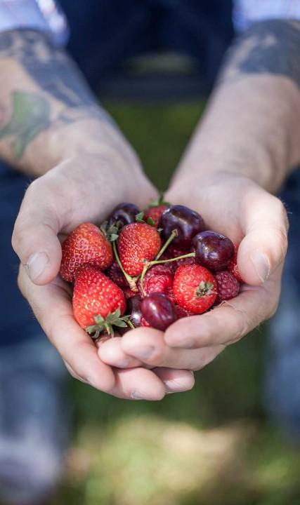 Duyck's Peachy-Pig Farm Berries