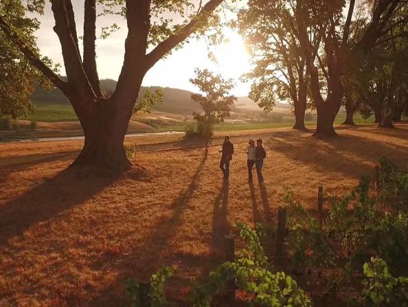 Montinore Estate Video Still