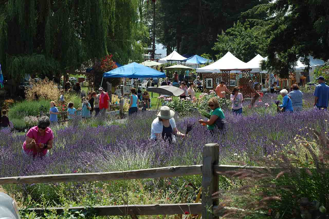 Things to do in the Tualatin Valley Lavender Festival