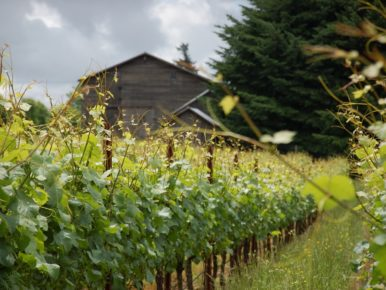 Vineyard_Alloro_AG