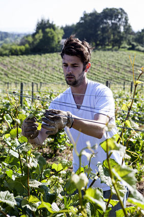 Plum Hill Vineyards currently grows Pinot Noir, Pinot Gris, Riesling and Pinot Blanc.