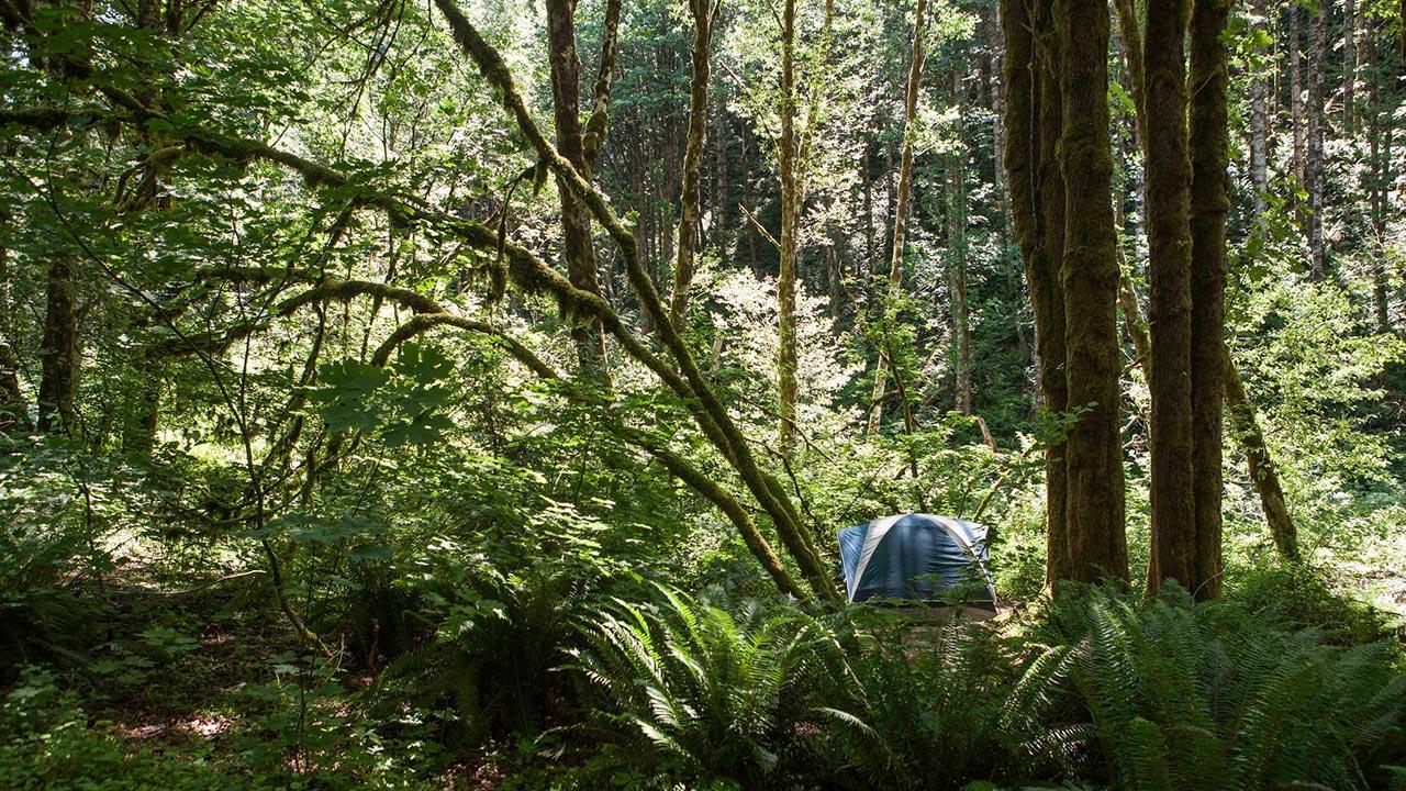 Gales Creek Camping