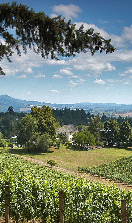 David Hill Vineyards