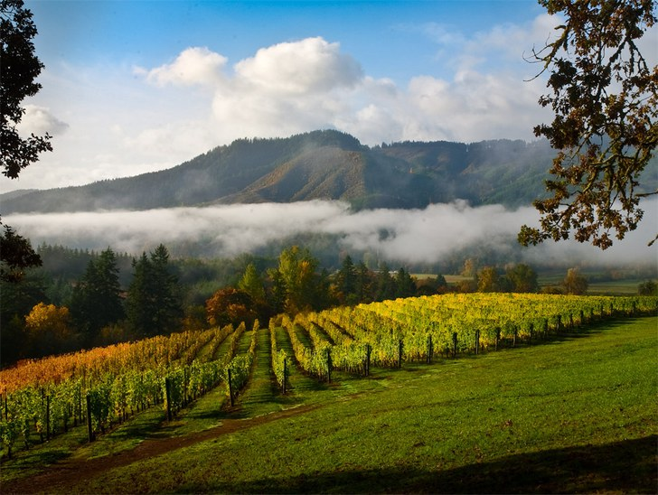 Vineyard and Valley Scenic Tour Route