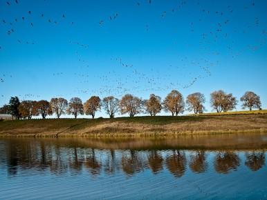 Wetland Birds CREDIT_Joel_Zak