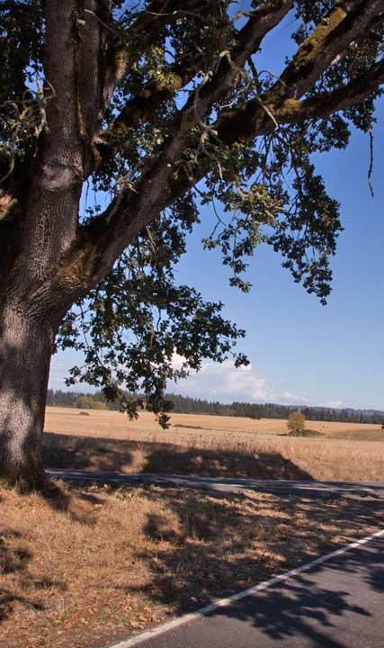 Tree Scenic Tour Route