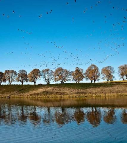 wetlands_CREDIT_Joel_Zak