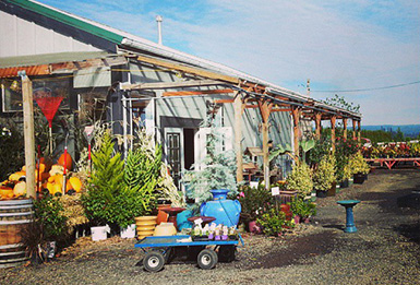 Larsen Farm Nursery, Hillsboro, OR in the Tualatin Valley