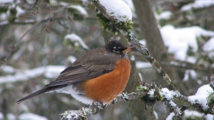 Winter Bird Watching in Oregon's Tualatin Valley