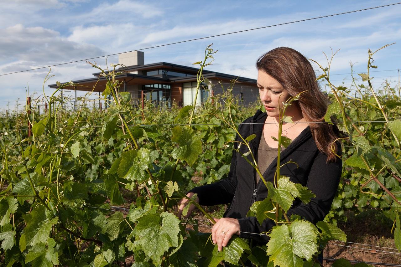 Meet Ponzi Vineyards Tualatin Valley