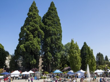 Fall Markets in the Tualatin Valley