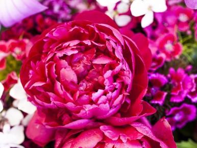 Beaverton Farmers Market flowers