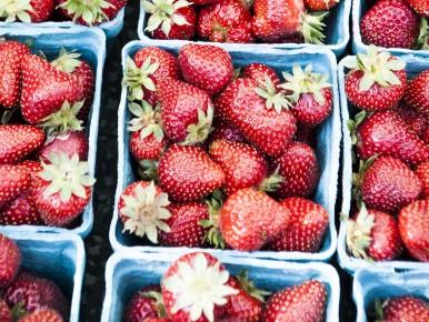 Oregon Strawberry Festivals, U-Pick and Farms