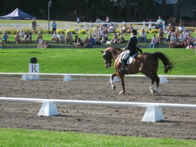 Horseback Riding and Dressage Near Portland