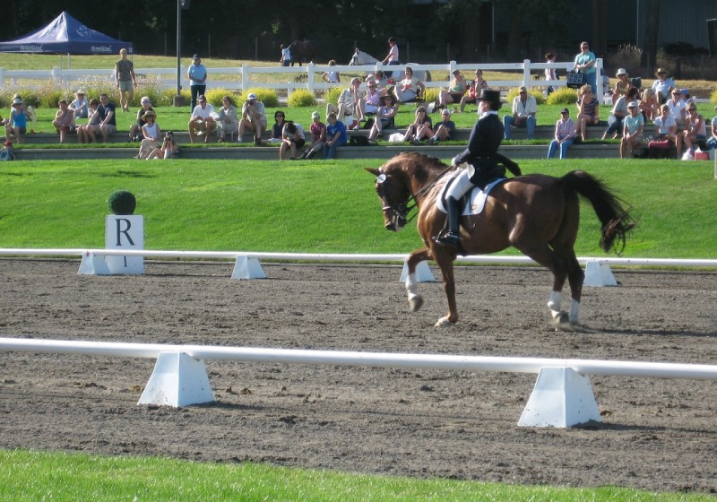 Dressage at DevonWood