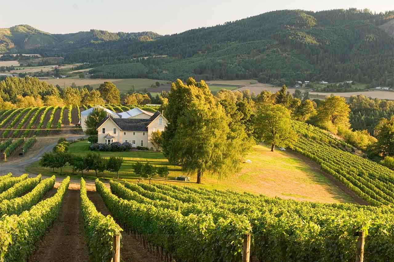 vineyards oregon