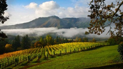Vineyard Valley Scenic Tour Route