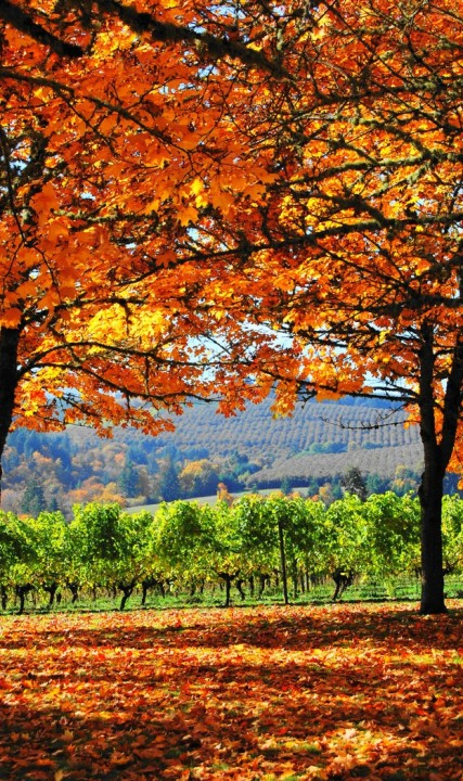 Tualatin_Vineyard_Estate