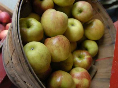 Apple Picking Near Portland