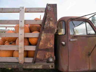 Unique Pumpkin Patches near Portland
