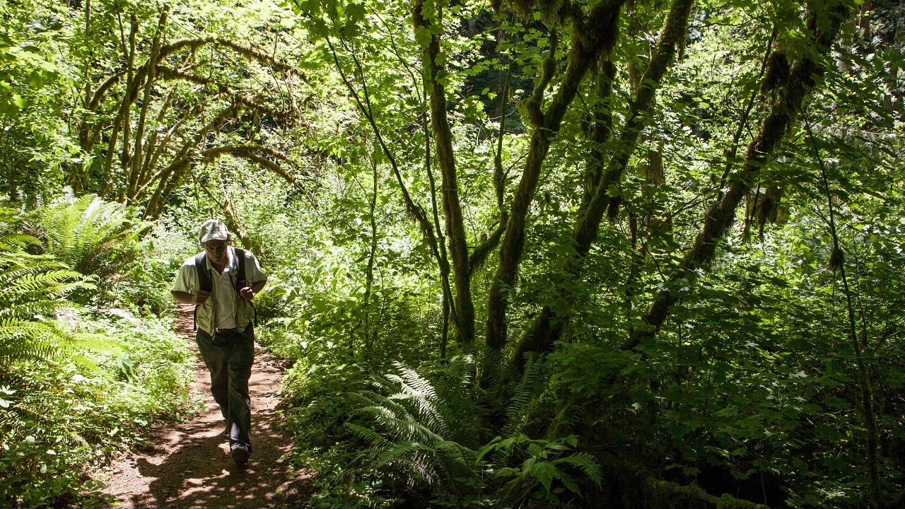 IMG_2753_Tillamook_Forest_Gales_Creek_2015_Ken_Kochey