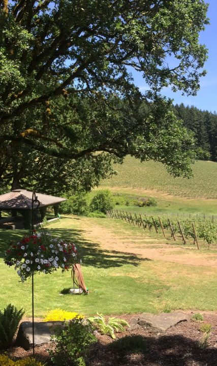 Shafer_Vineyard_Glawe_VERT_4