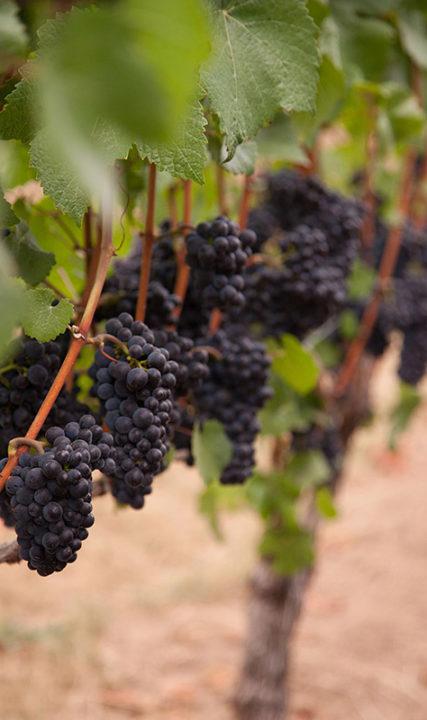 Blakeslee Vineyards