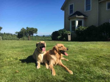 Treat Your Dog to an Oregon Wine Getaway